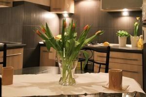 Rośliny w domu – wyjątkowe korzyści